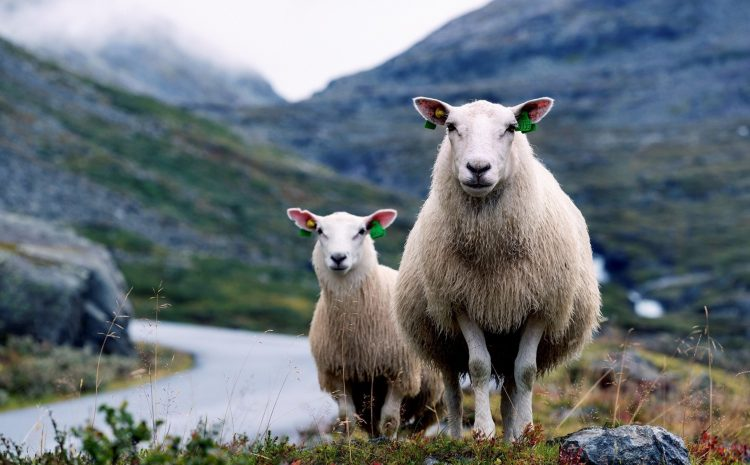 How to find out about the History of Wool