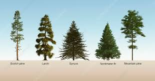 The difference between softwood and hardwood.